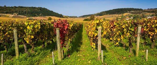 Un séminaire au milieu des vignes à Beaune