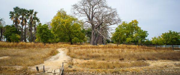 Un séminaire au Sénégal, entre culture et traditions - 1