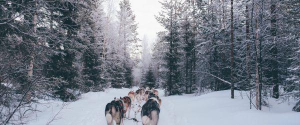 Un séminaire sur le cercle polaire, en Laponie Finlandaise - 1