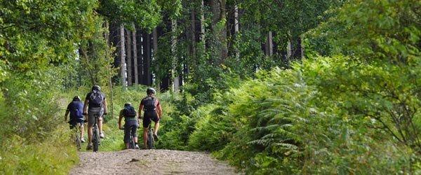 Un séminaire 100% nature, au cœur de la forêt à Rillé