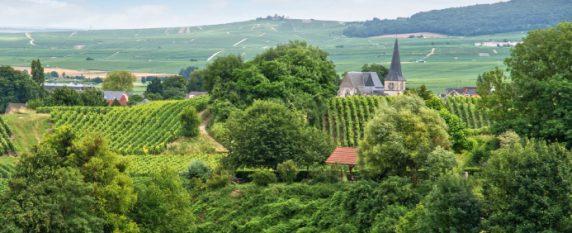 Les vignobles de Reims